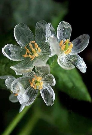 Skeleton flower[1].jpg